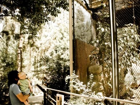 Cruz Zoo 5